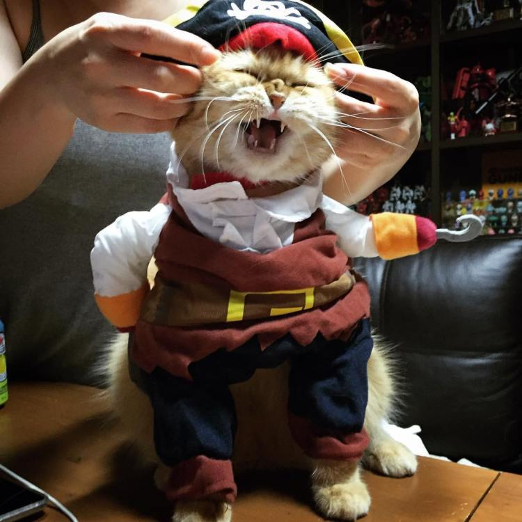 Zeon Pirate