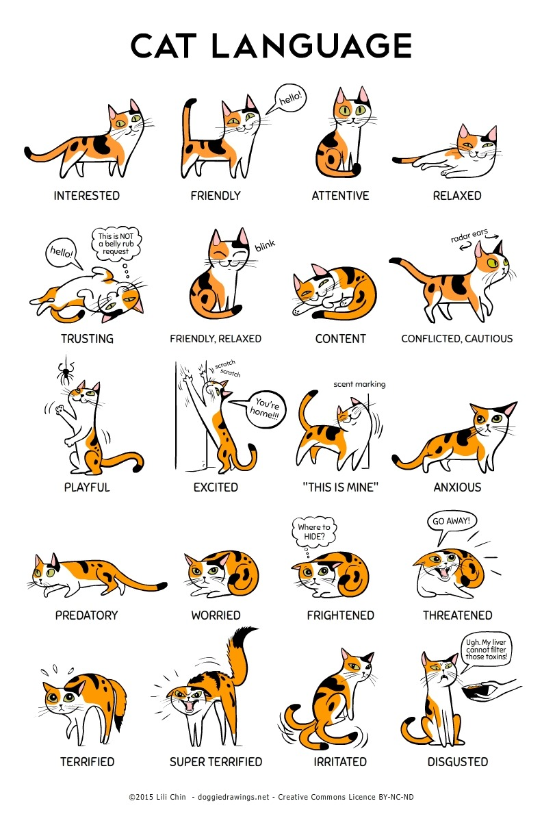 An Informative Illustration That Explains What Cats Are Communicating Through Their Body Language