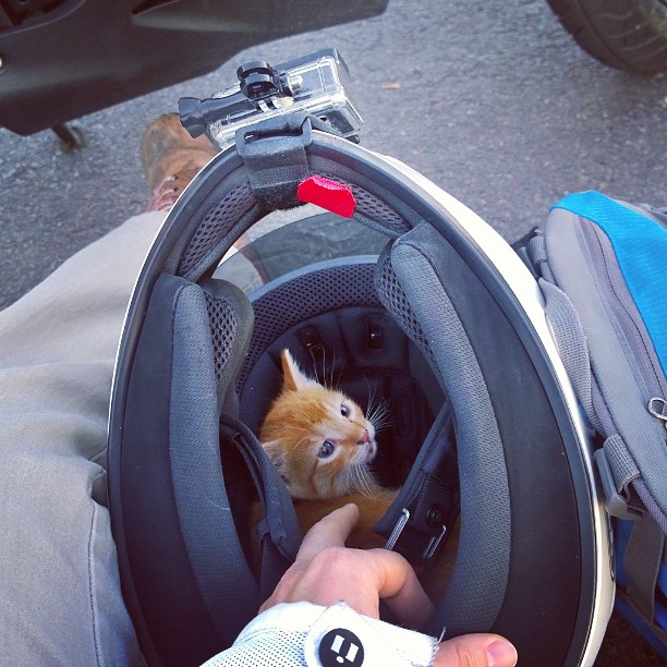 Kitten in Helmet