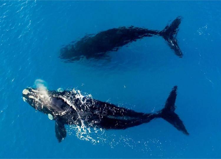 Moby Dicks
