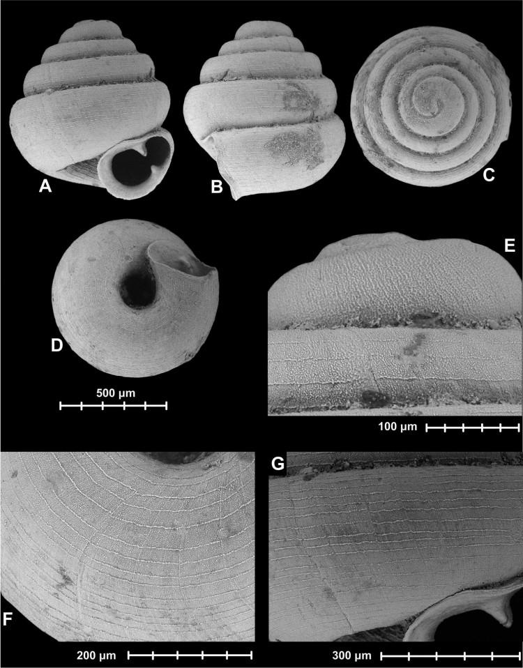 Seven Snails