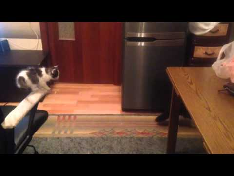 A Determined Little Kitten Repeatedly Attempts to Jump Over to the Counter Until He Gets It Right