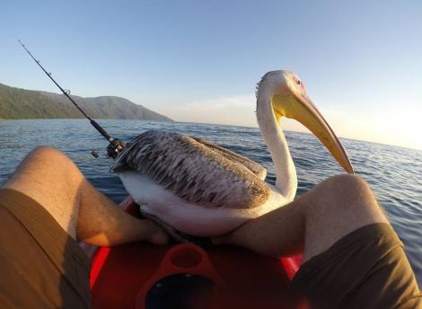 Big Bird on Boat