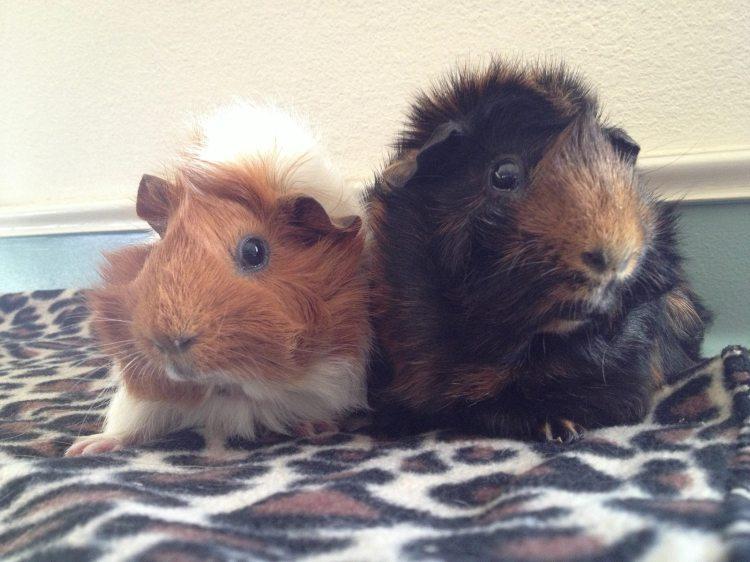 Estella and Pip