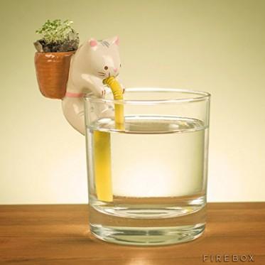 Self Watering Cat
