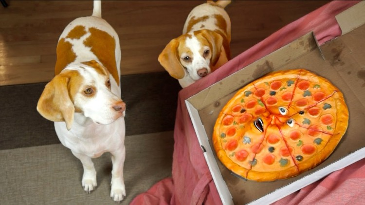 Maymo the Lemon Beagle and His Sister Penny Are Confounded by a Talking Pizza Who Wants to Party