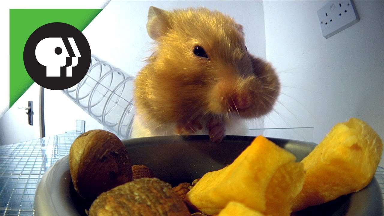 Kia Hamster Commercials