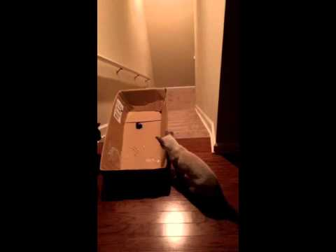 Playful Human Tricks His Cats Into Using Their Beloved Cardboard Box to Slide Down the Stairs