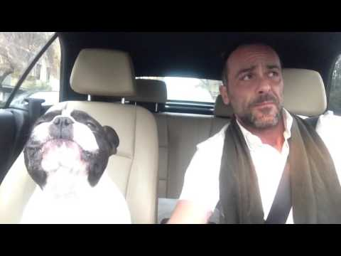 Singing French Bulldog and His Human Perform a Duet of the Rihanna Ballad 'Diamonds' in the Car