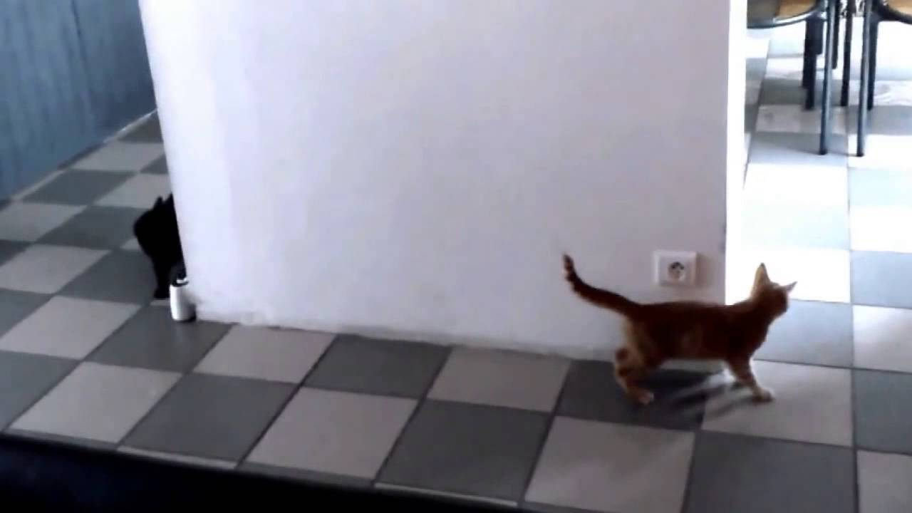 Tiny Orange Kitten Hiding Behind a Wall in Surprise Mode Gets Outsmarted by His Older Sibling