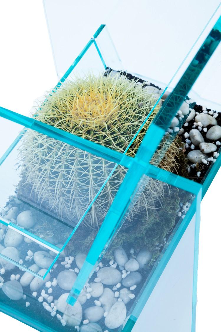 Cactus Chair Cactus
