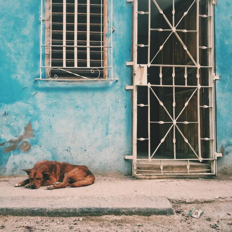 Havana Dog Sleeping