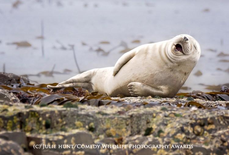 It's not funny.. I've got cramp in my flipper!