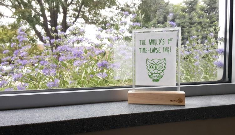 Living Ink Owl on a Windowsill