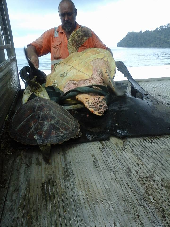 Rescuing Turtles