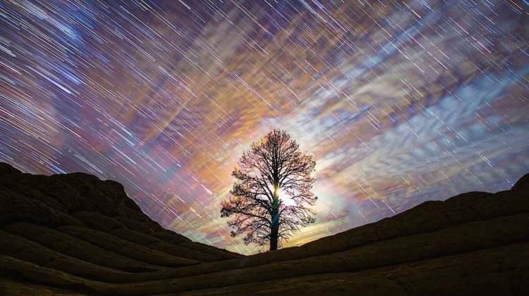 Skyglow Tree Against Sky