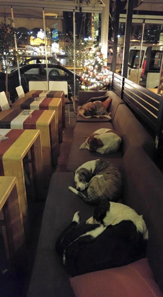 Cafe on the Greek Island of Lesbos Generously Offers Shelter to Stray Dogs During Cold Winter Nights