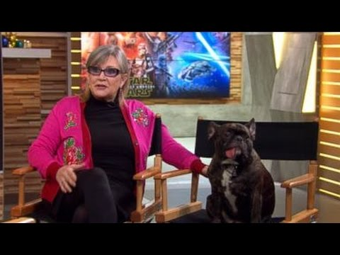 Laughing Dog Video Good Morning America