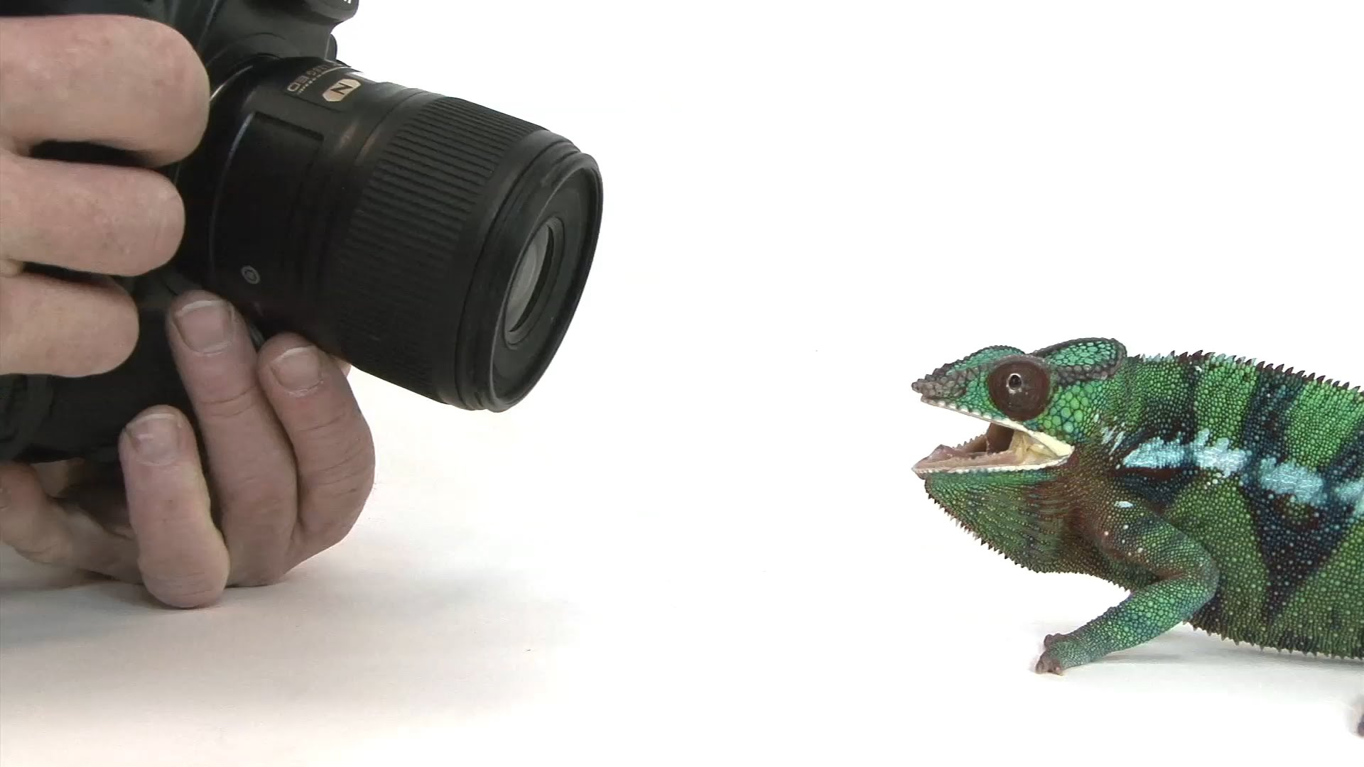 Ambitious Journalist Attempts to Photograph 12,000 Endangered Animals Before They Become Extinct