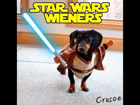 Crusoe the Celebrity Dachshund and His Brother Oakley Dress as Star Wars Characters and Have a Lightsaber Battle