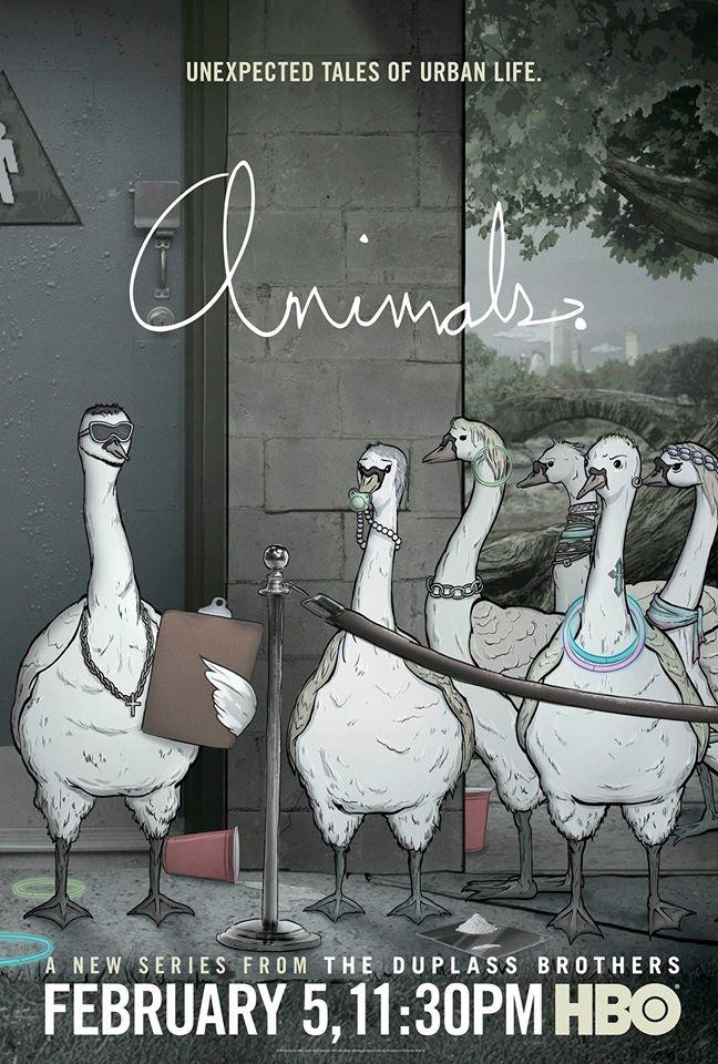 Animals Birds Poster