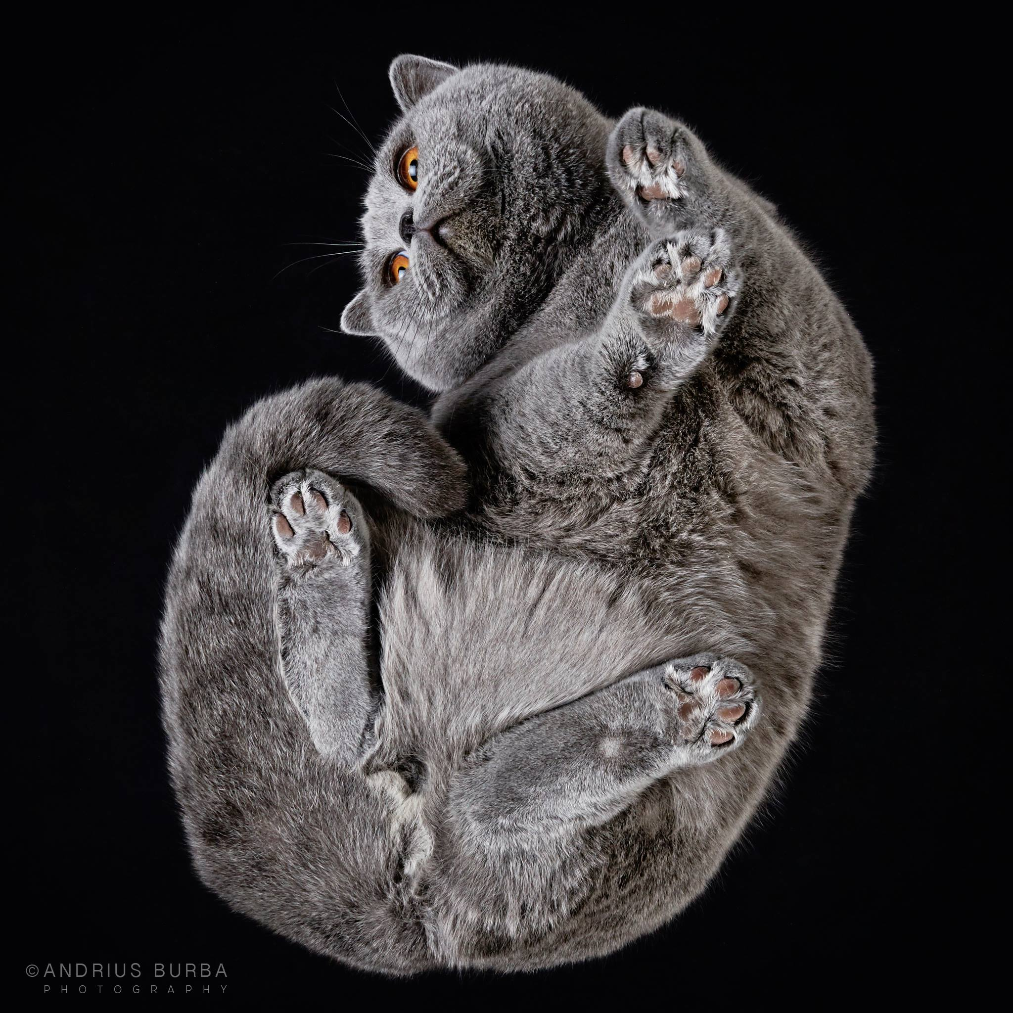 Photographer Cleverly Captures the Often Unseen View of Cats