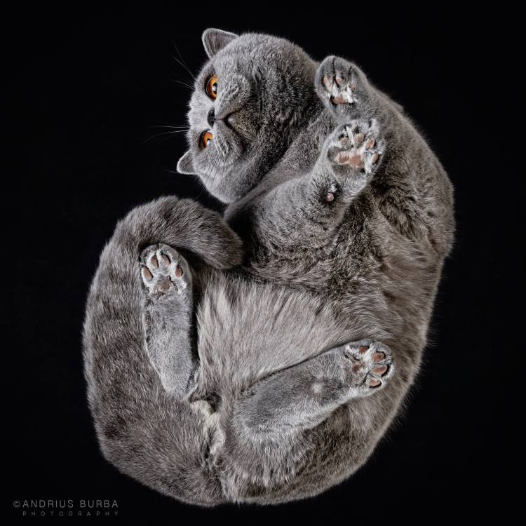Photographer Cleverly Captures the Often Unseen View of Cats From Underneath a Glass Table