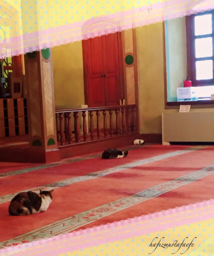 Cats in Mosque