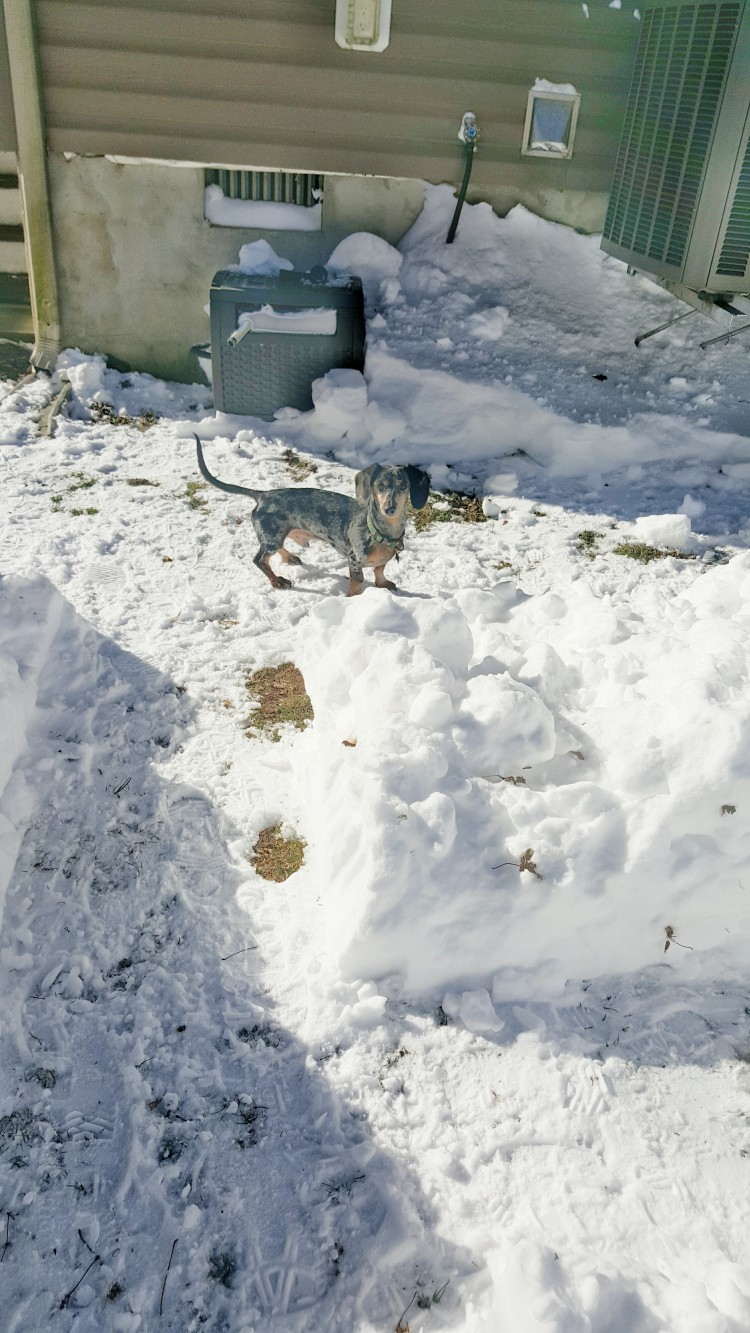 loving human creates a backyard snow maze for her two dogs while