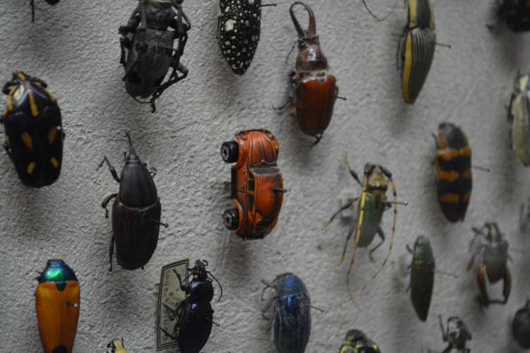 VW Bug in Insect Collection