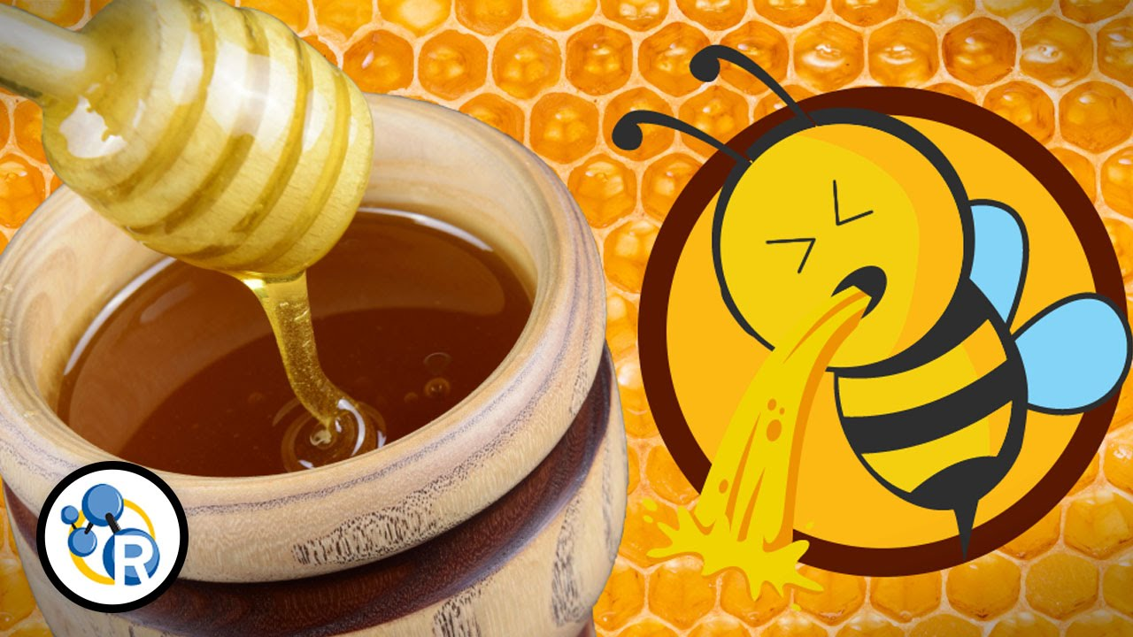The Chemistry of Honey Reveals That It's Really Just Bee Puke
