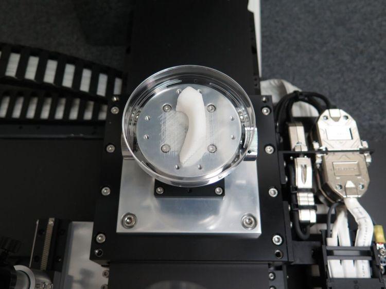 3D Bioprinted Jawbone