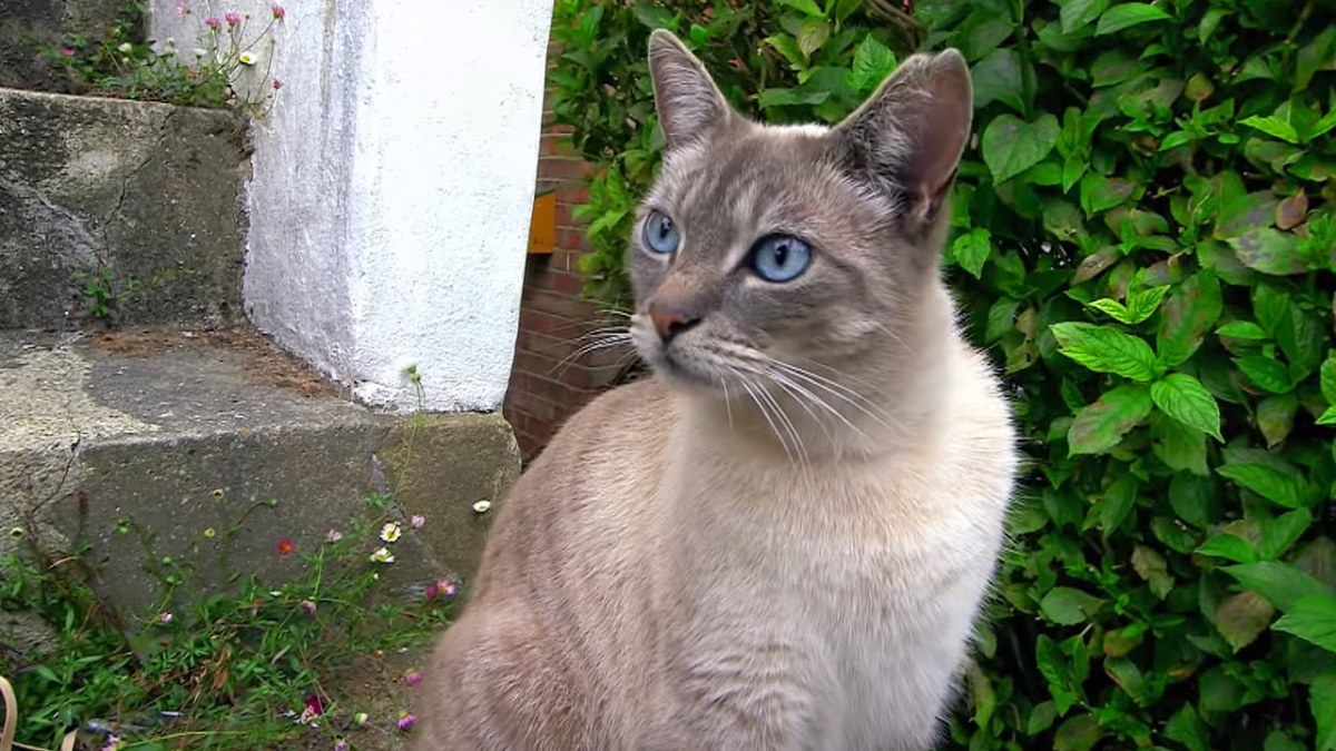 How Cats Attempt to Communicate by Using a Variety of Languages That Humans Can Understand