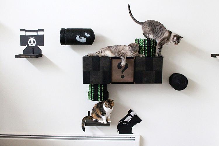 Mario Cat Complex
