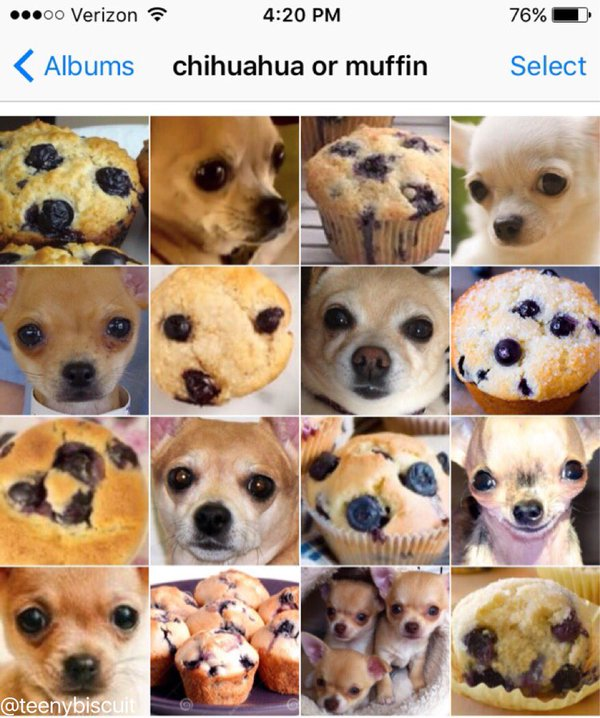 A Funny Photo Series That Compares Dogs and Other Small Animals With Their Edible Counterparts