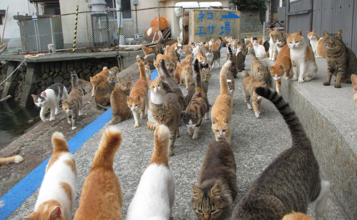 Caretaker Of Japan S Cat Island Is Overwhelmed With