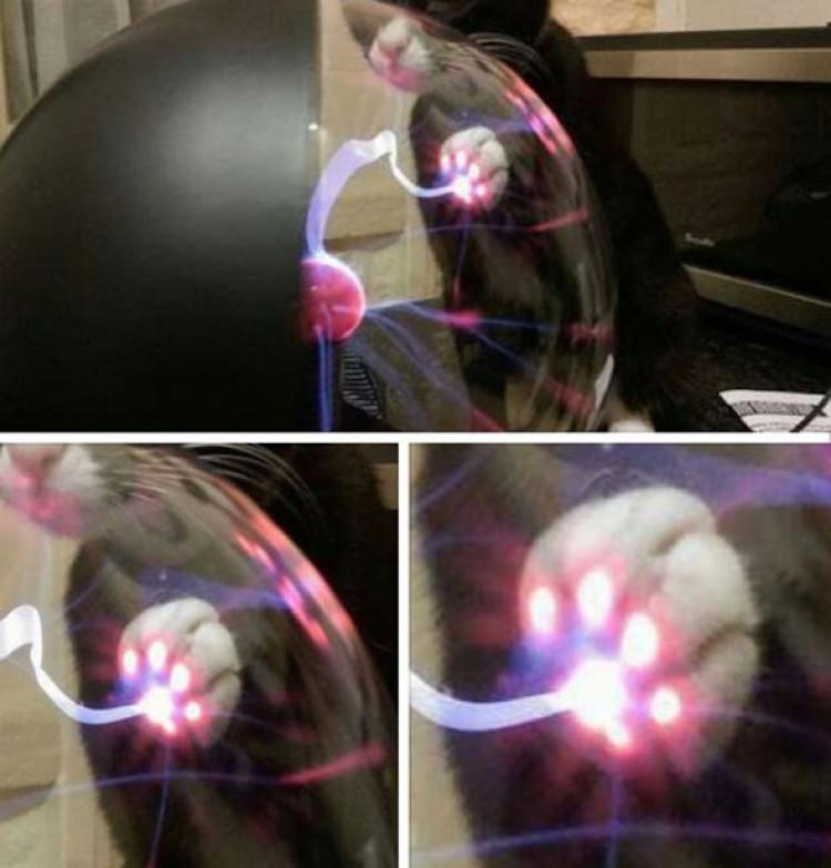 Plasma Cat