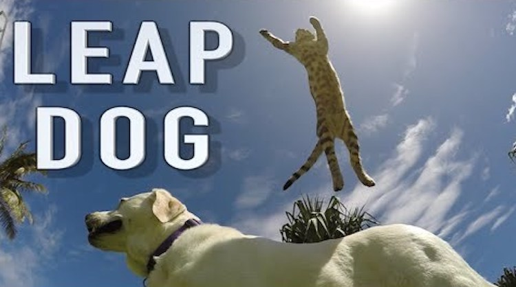 Leap dog slow motion cat leap