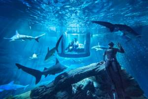 Airbnb Shark Tank and Diver