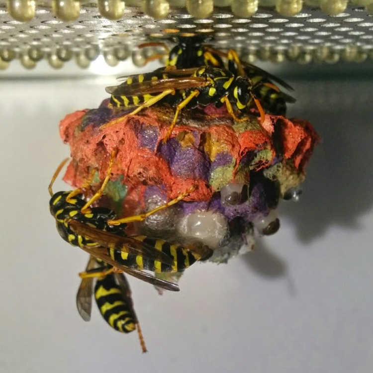 Colorful Nest