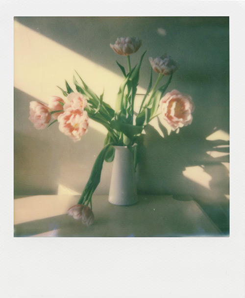 I-1 Sample Photo Flowers