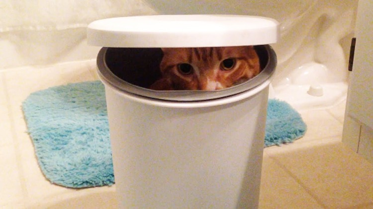 Cole the Black Cat Looks On As His Clumsy Little Brother Marmalade Climbs Into a Garbage Pail