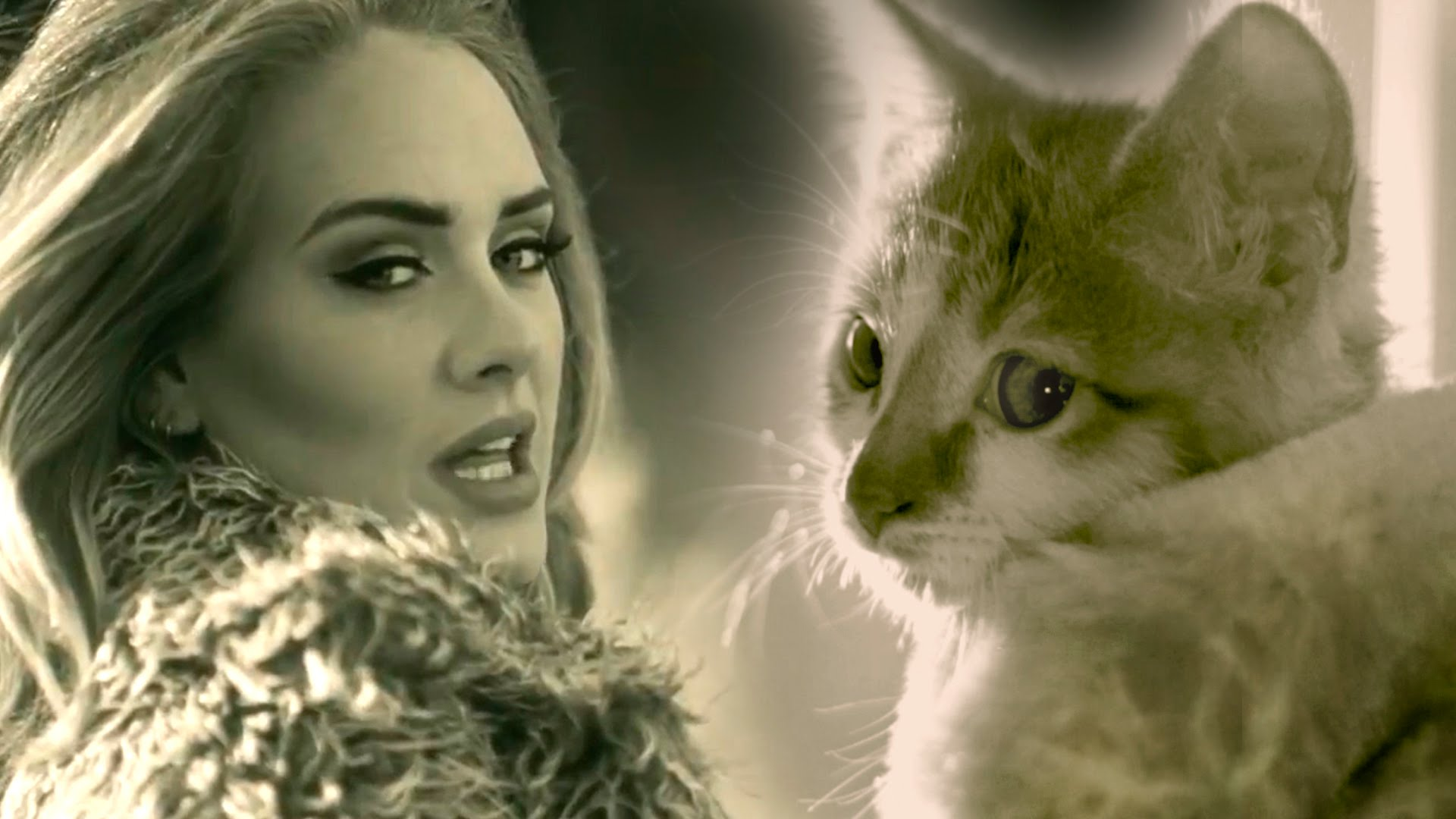 Meow An Adorable Parody Of The Adele Song Hello Promoting Cat Adoption At East Bay SPCA