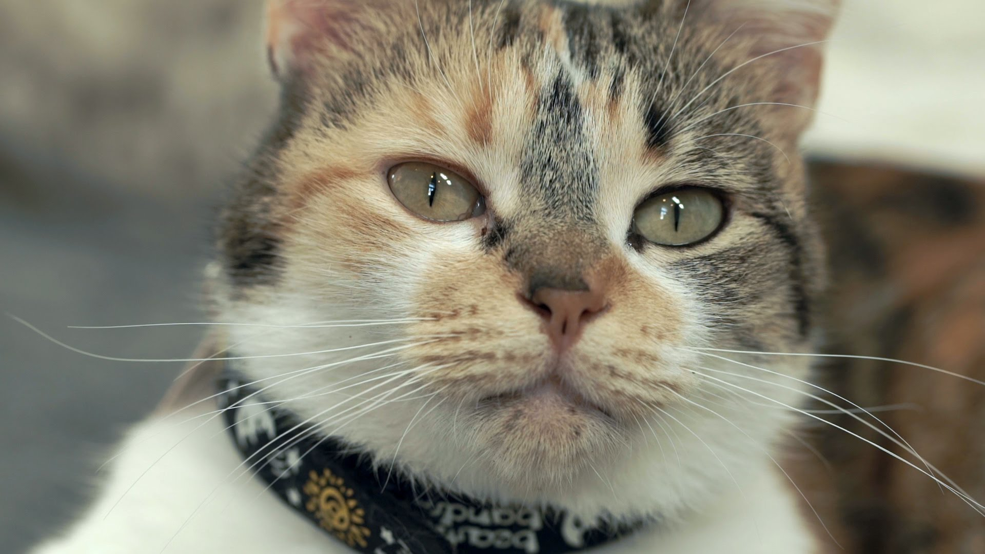 swedish scientists study how cats respond to the way humans