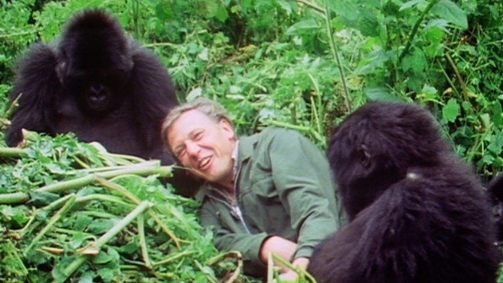 The BBC Celebrates the Life and Work of Naturalist Sir David Attenborough on His 90th Birthday