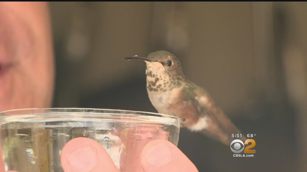 A Formerly Feral Dog and His Human Save an Injured Baby Hummingbird From Almost Certain Death