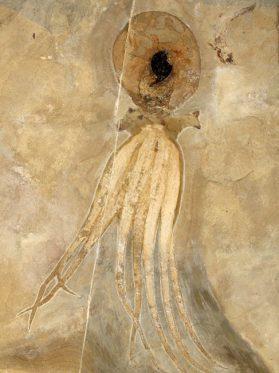 Fossil -Hans Arne Nakrem
