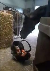 Nanny Horse