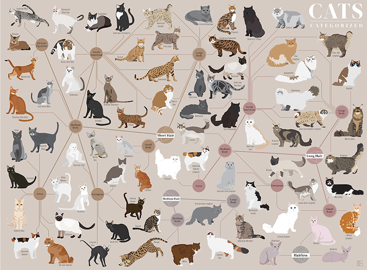 Cats Categorized