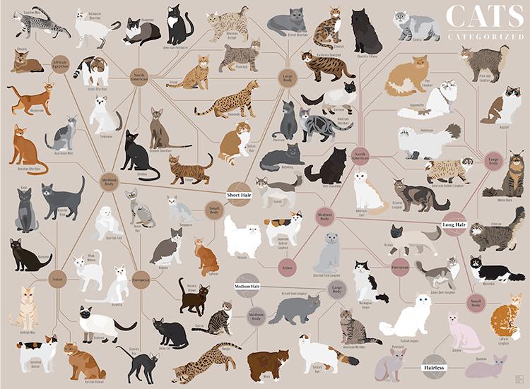 Cats Categorized